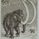 """""""Zverokruh"""" - mamut"""